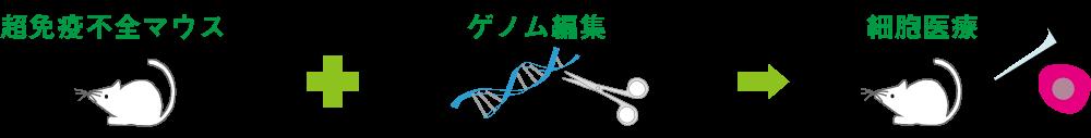 超免疫不全マウスへの追加ゲノム編集